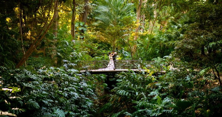 fotografía en el medio de la naturaleza boda